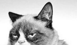 不爽猫 表情包