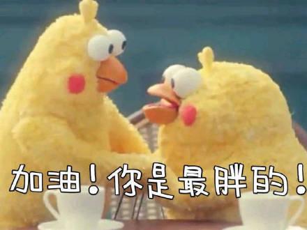 鹦鹉兄弟 表情包
