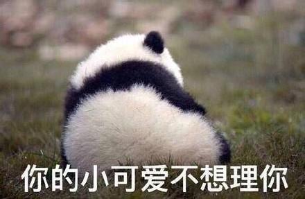 国宝熊猫表情包动态gif图,这么可爱的剪刀手熊猫宝宝你拒绝得了么?