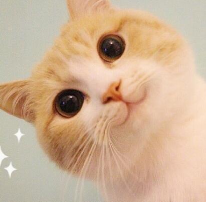 小萌猫 表情包