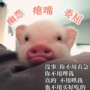 吸猪 表情包