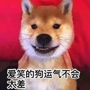 柴犬 表情包