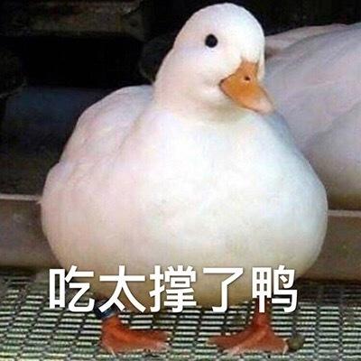 大肥鸭表情包_开心鸭 表情包