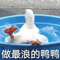开心鸭 表情包