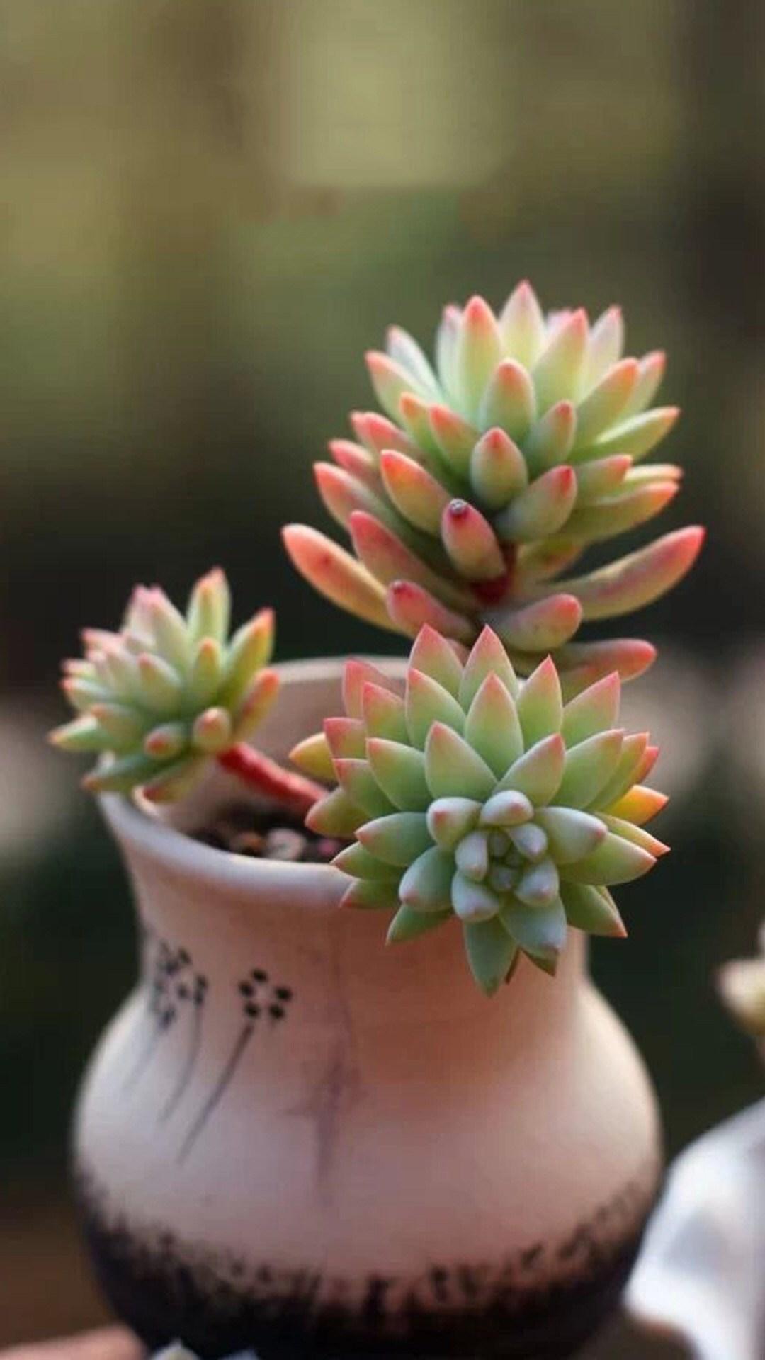 植物囹�a_植物