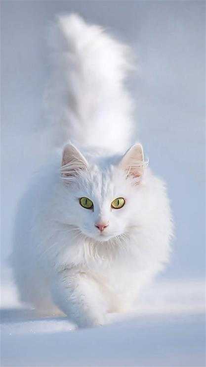 壁纸 动物 猫 猫咪 小猫 桌面 417_741 竖版 竖屏 手机