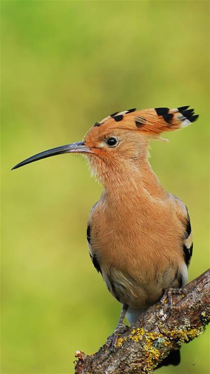 壁纸 动物 鸟 鸟类 雀 417_741 竖版 竖屏 手机