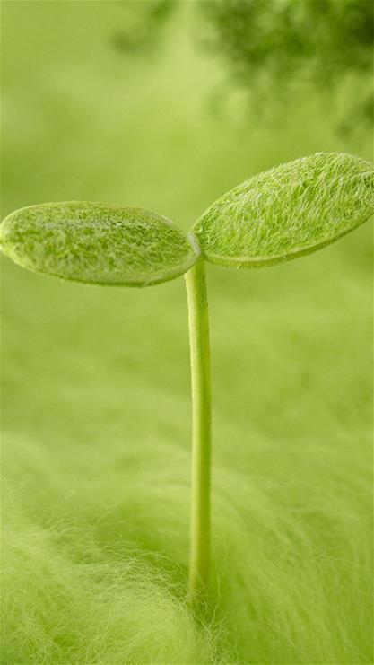 壁纸 电脑桌面 发芽 绿色 绿色植物 嫩芽 嫩叶 矢量 新芽 植物 种子