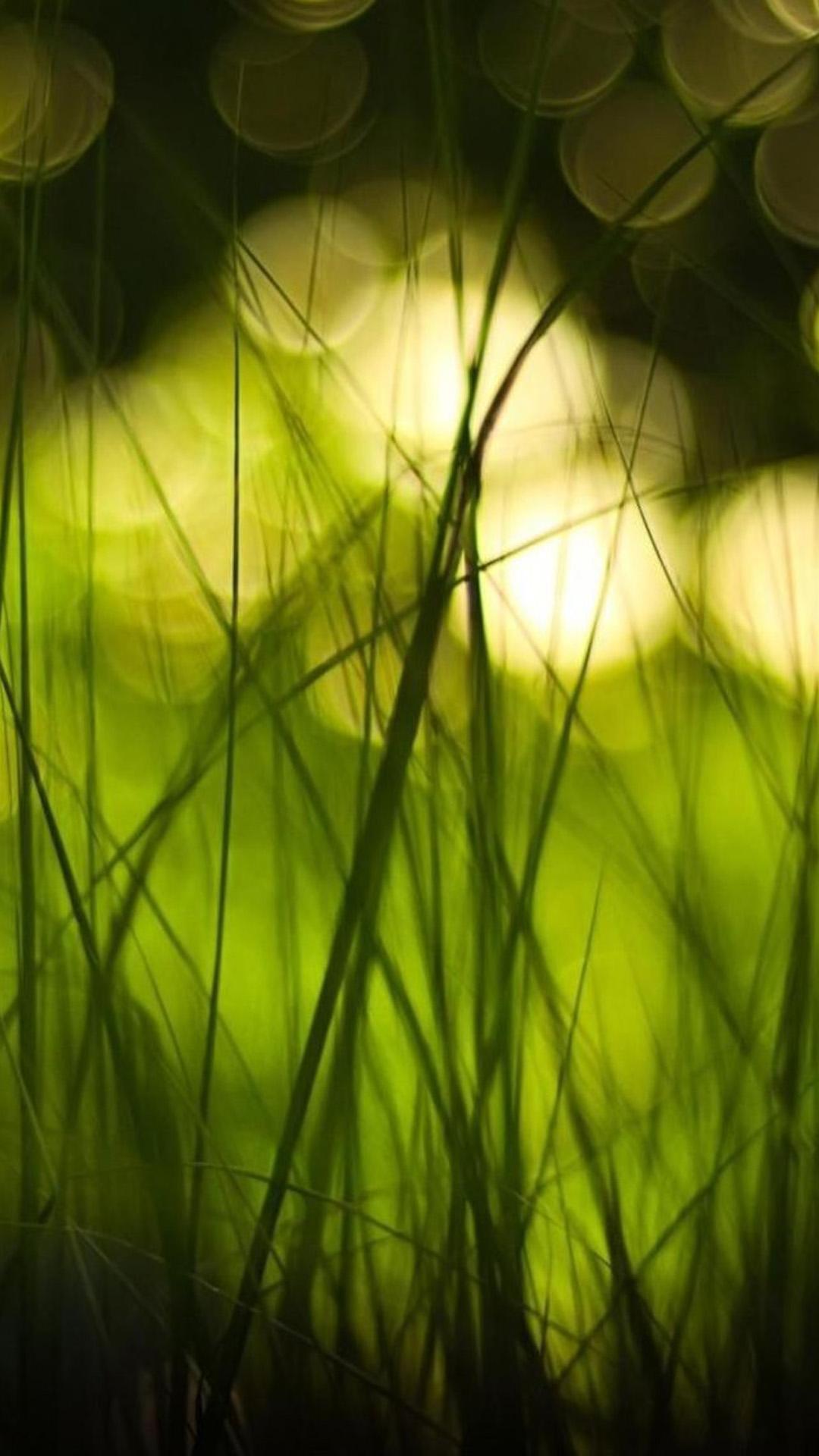 iphone6plus风景绿色壁纸_iphone6plus风景绿色壁纸