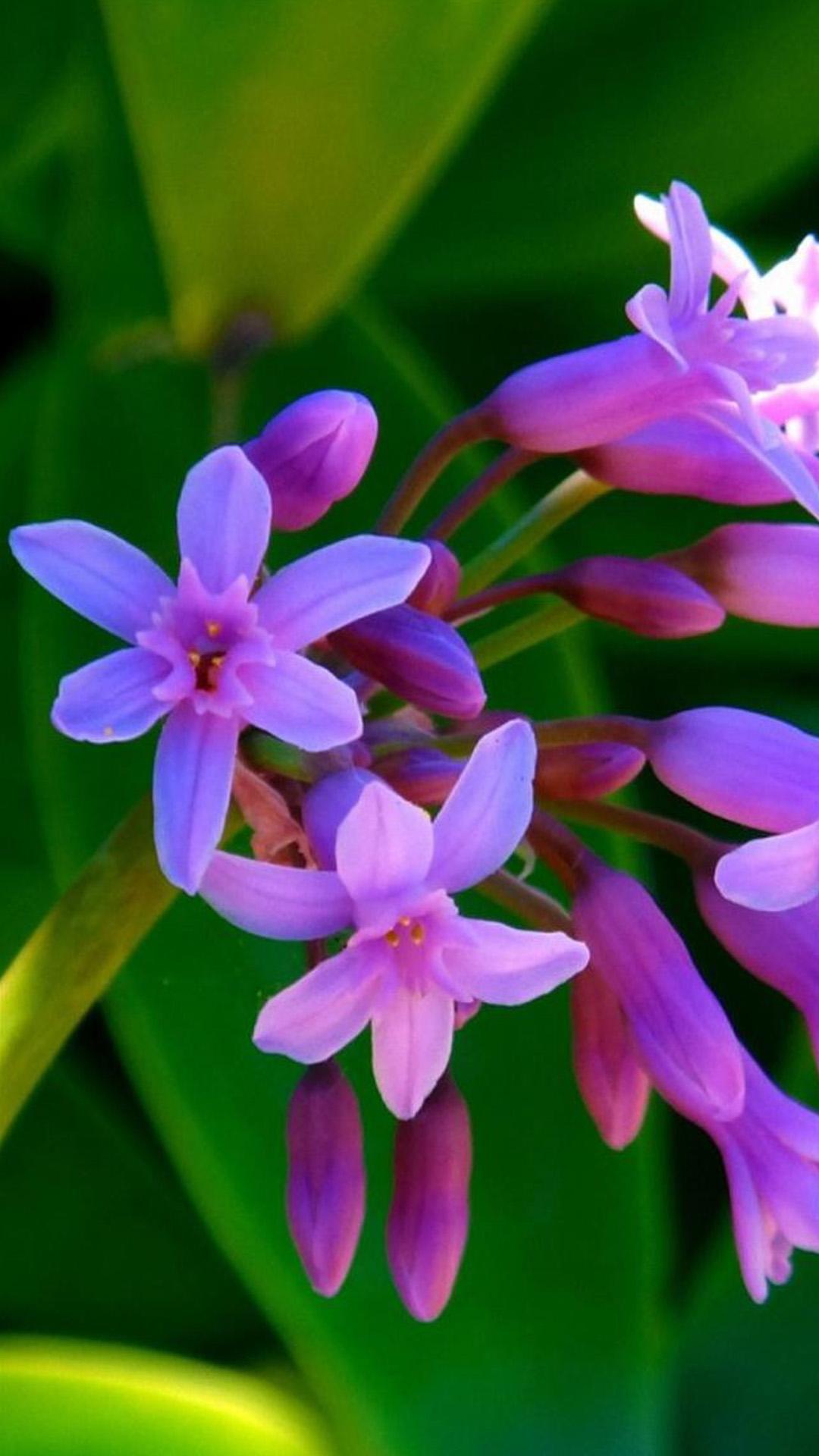 最可爱的植物花