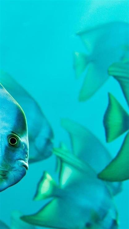 海底 海底世界 海洋馆 水族馆 鱼 鱼类 桌面 417_741 竖版 竖屏 手机