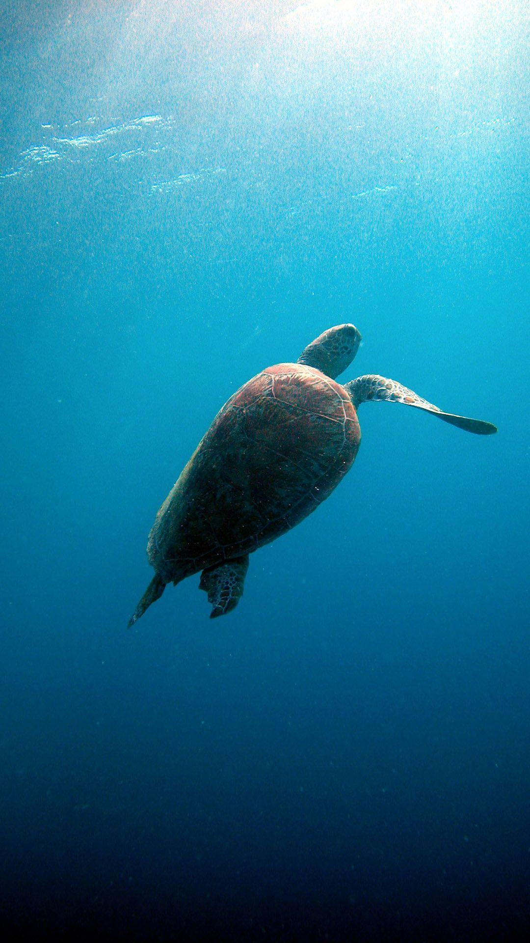 海洋动物通图片