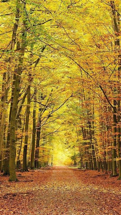 壁纸 风景 森林 桌面 417_741 竖版 竖屏 手机