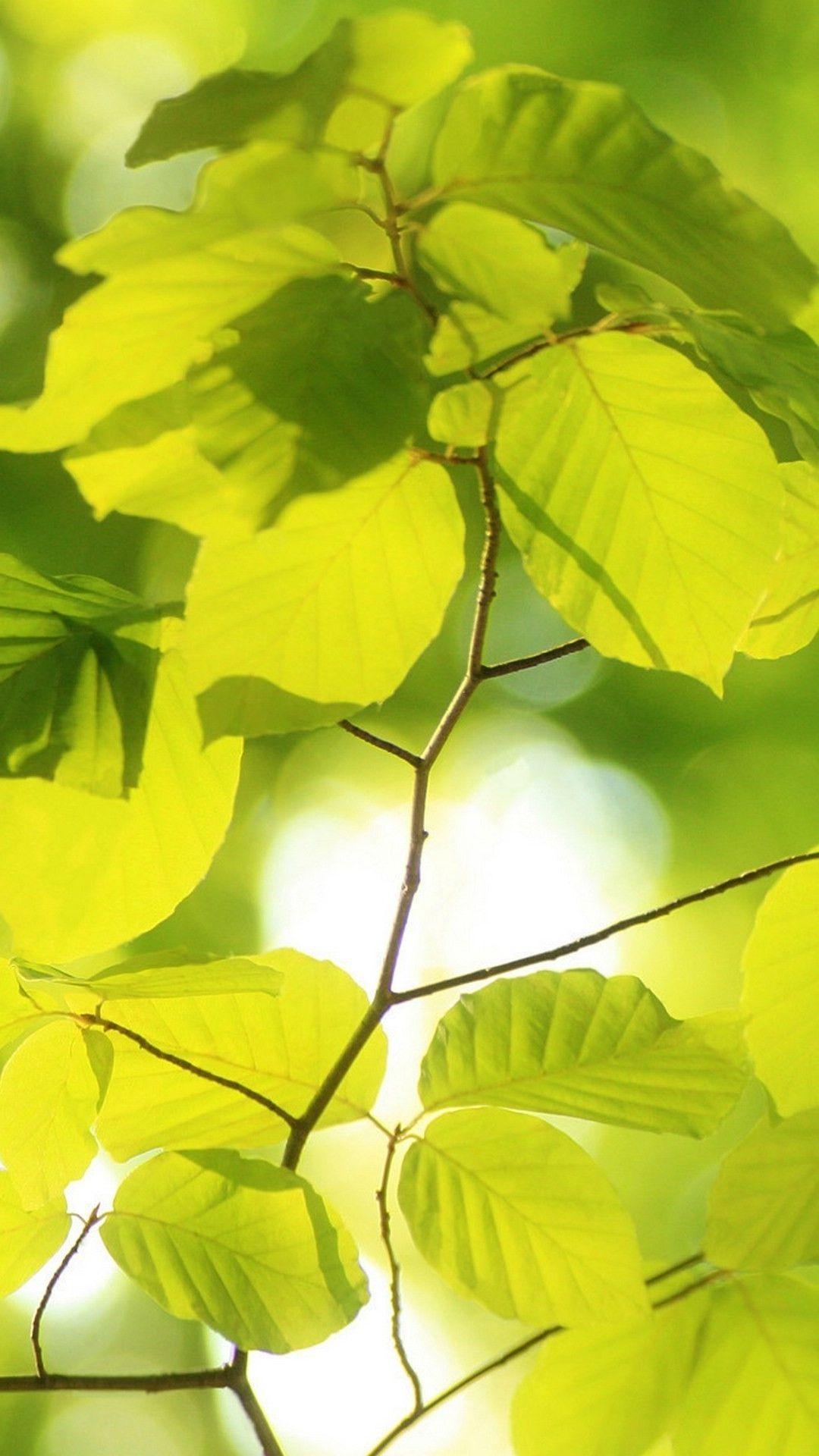 背景 壁纸 花 绿色 绿叶 树叶 植物 桌面 1080_1920 竖版 竖屏 手机