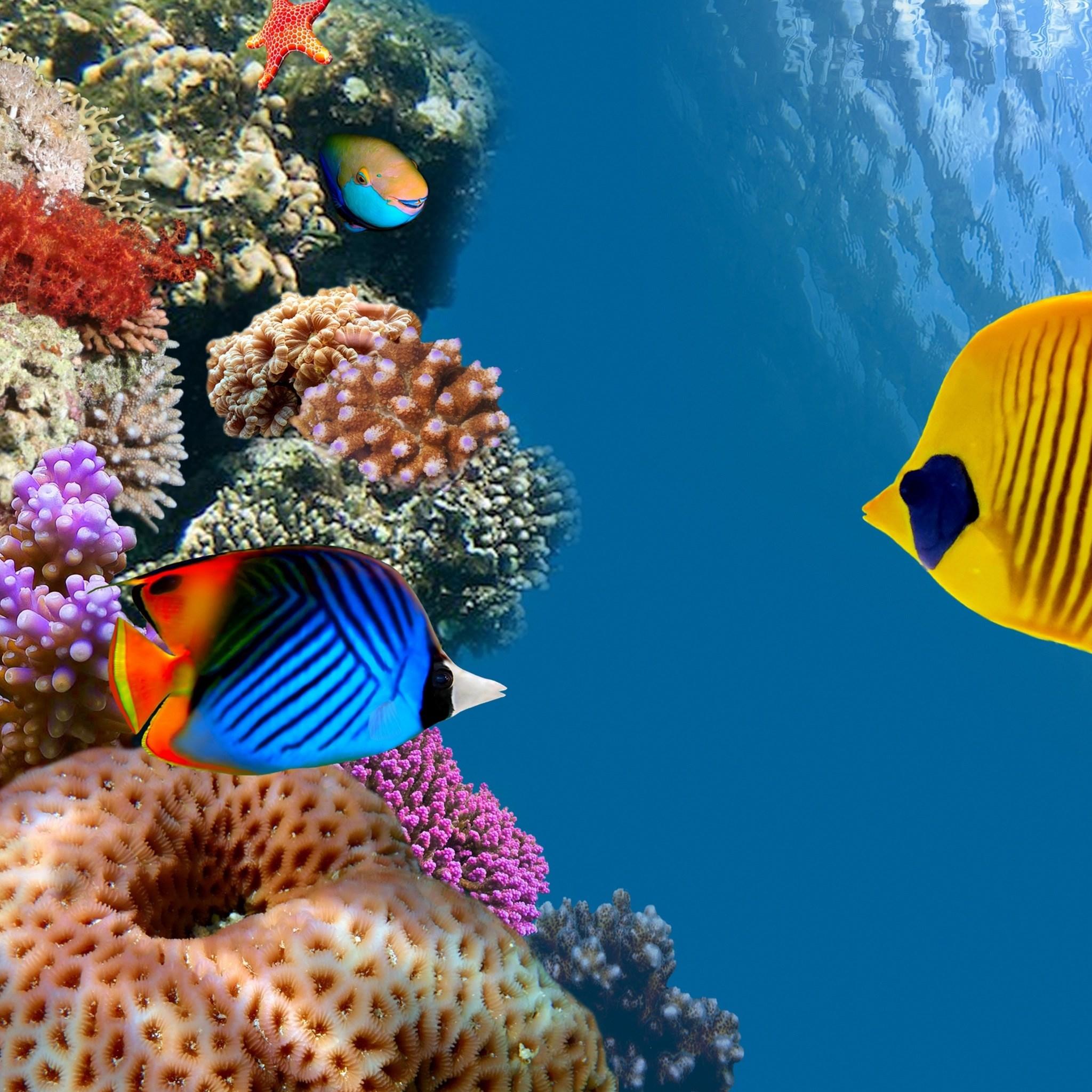 壁纸 海底 海底世界 海洋馆 水族馆 2048_2048