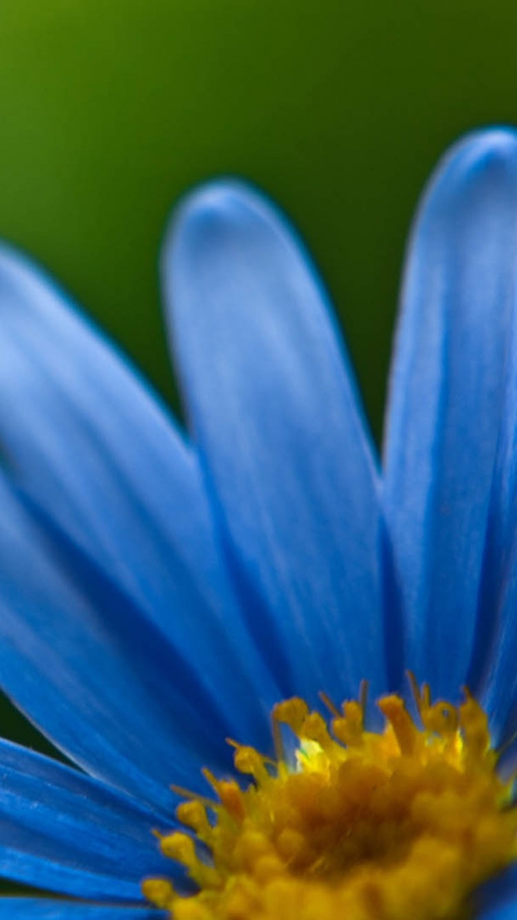 iphone6植物蓝色壁纸_iphone6植物蓝色壁纸下载