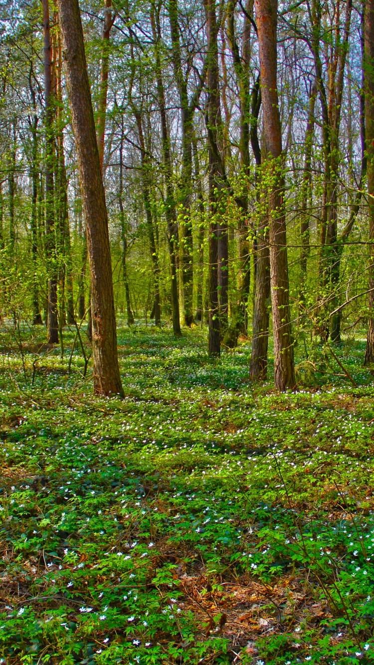 壁纸 风景 森林 桌面 750_1334 竖版 竖屏 手机