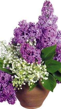 iphone6植物紫色壁紙_iphone6植物紫色壁紙下載
