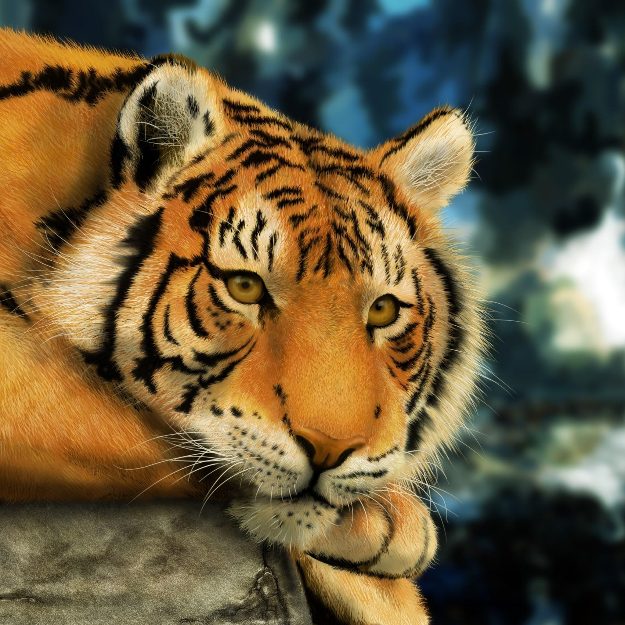 萌宠老虎图片大全可爱
