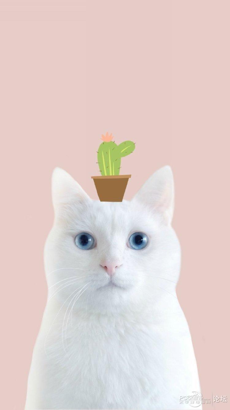 创意猫咪简笔画