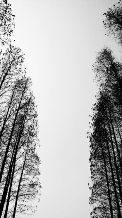 树林,天空,灰色