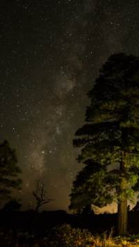 星空,银河,宇宙,星球,夜空,树